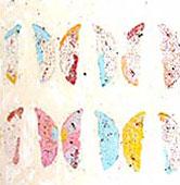 Papillons de Collioure